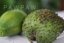 (Pawpaw = Papaya). <br />